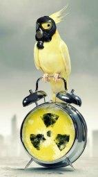 Pássaros e Teflon.jpg