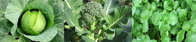 consumir-folhas-verdes-para-obter-calcio